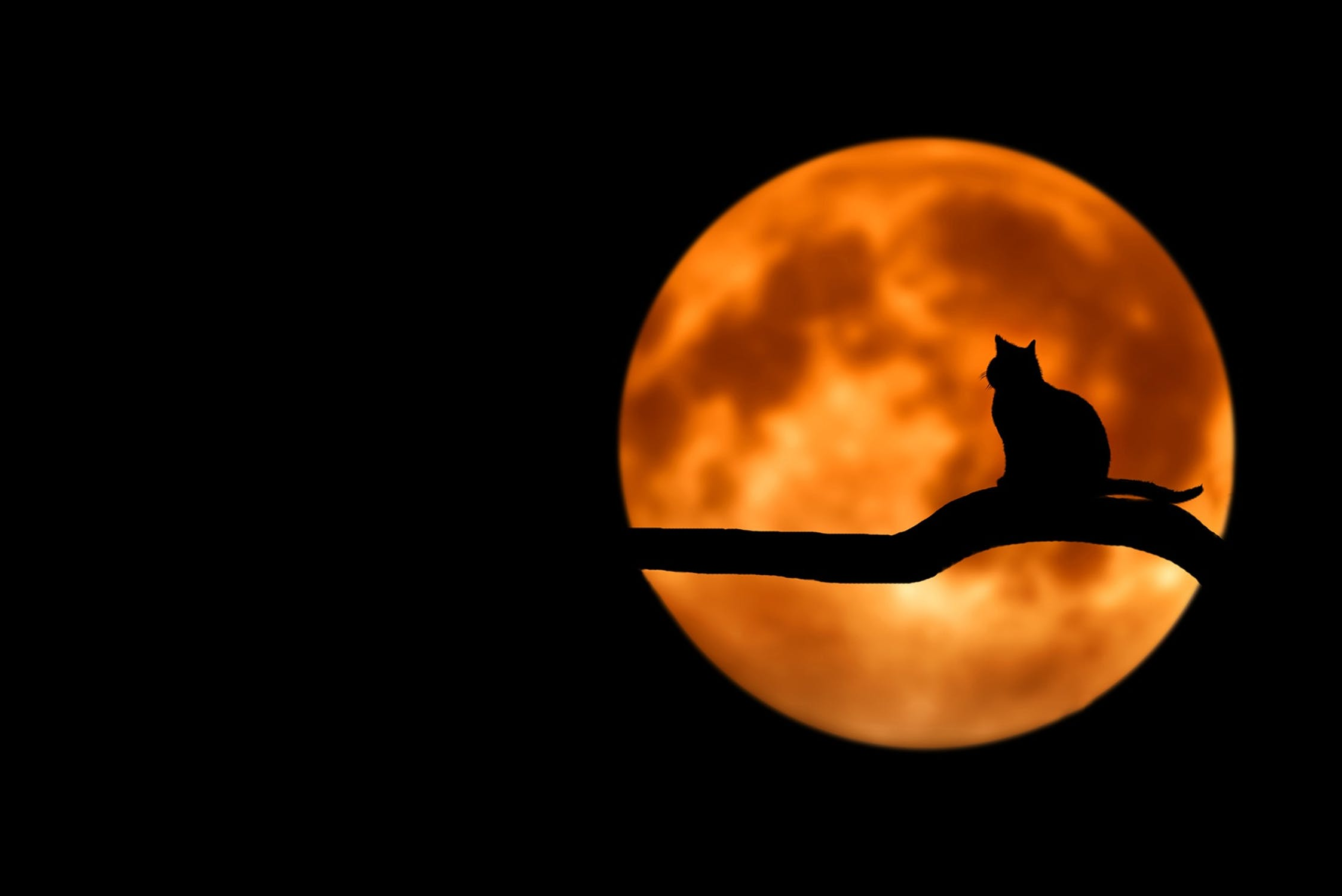Halloween Black Cat Moon Silhouette